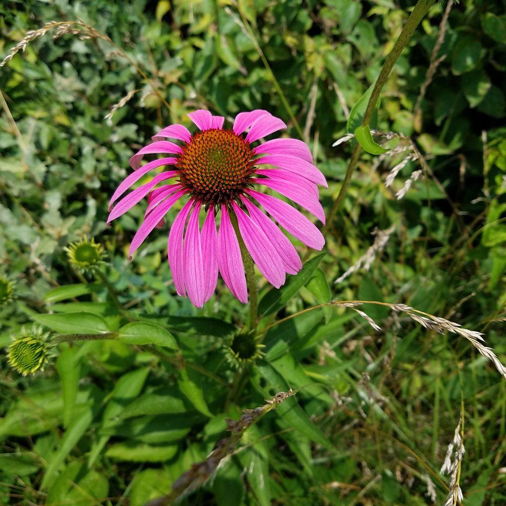 John Craddock Wetland Nature Preserve: 502 N Gavin St, Muncie, IN
