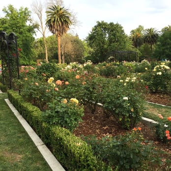 Good Photo Of McKinley Park Rose Garden   Sacramento, CA, United States. Evening  In
