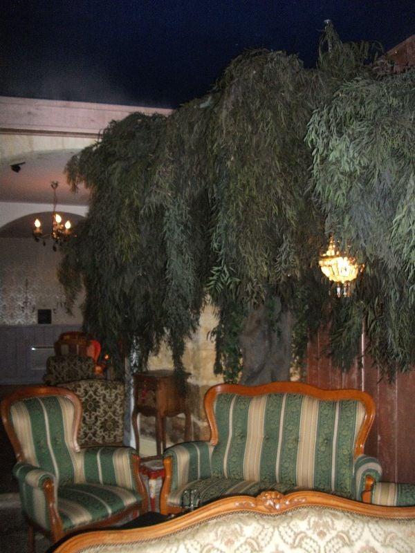 le petit bois 11 yelp. Black Bedroom Furniture Sets. Home Design Ideas