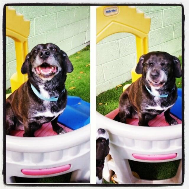 Dog Kennels In Oakland Fl