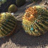 Ethel M Chocolate   1729 Photos U0026 497 Reviews   Botanical Gardens   2 Cactus  Garden Dr, Henderson, NV   Phone Number   Yelp