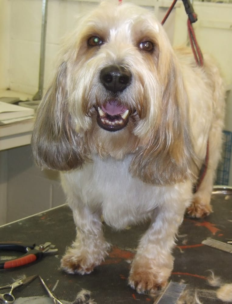 Dog Grooming In Manchester Pa