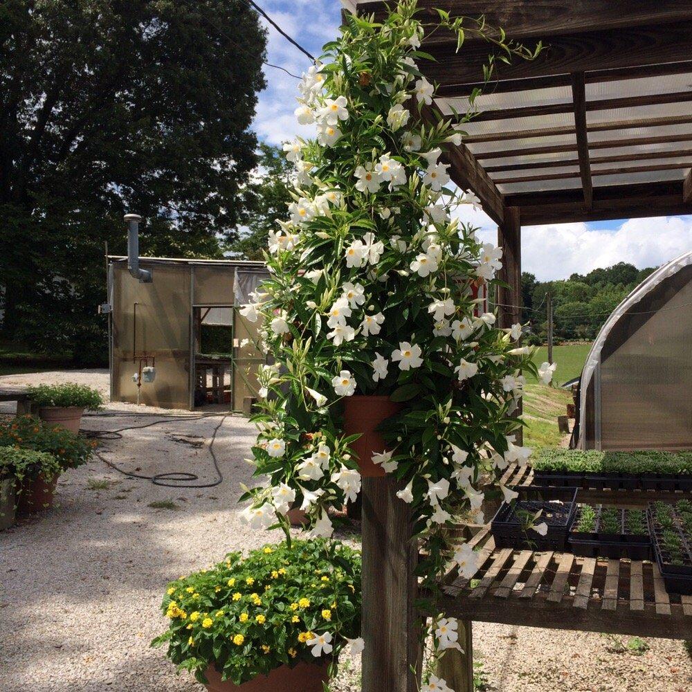 Williams Greenhouse: 219 Dogwood Ct, Harriman, TN