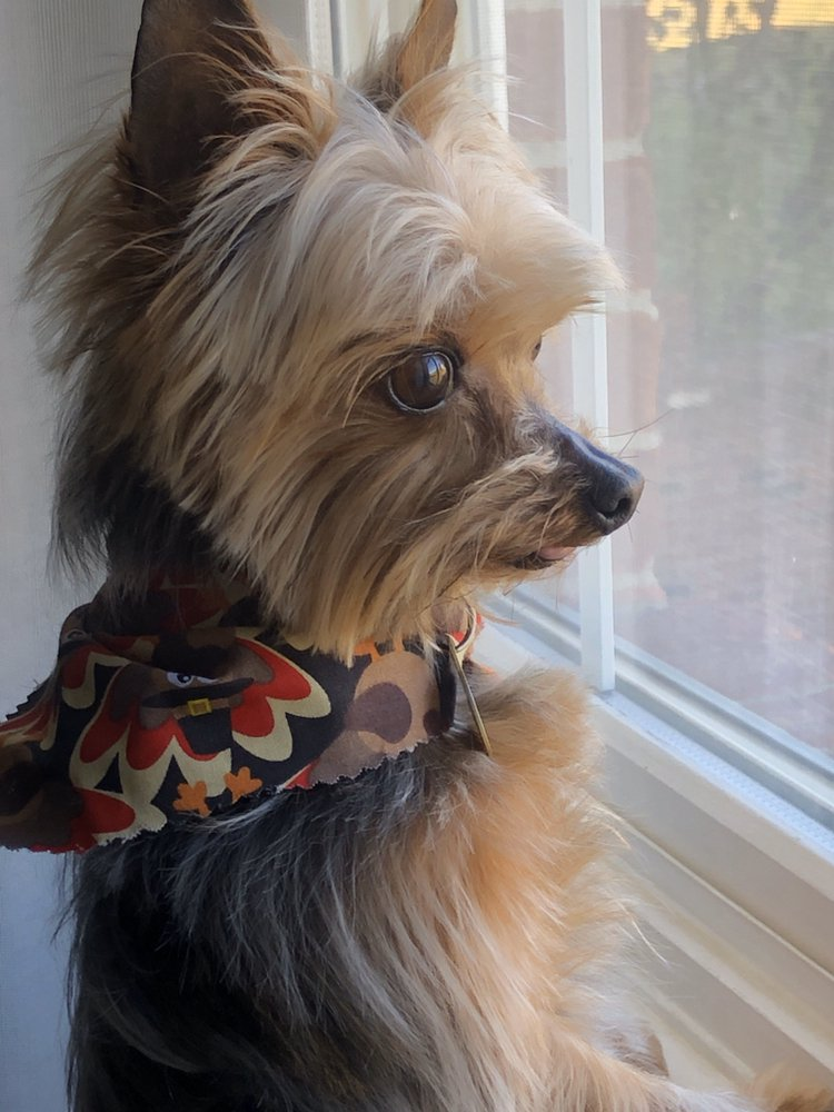 Buckner Animal Clinic: 4121 W Hwy 146, Buckner, KY