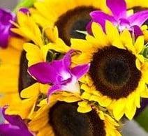 Upsy-Daisy Floral: 5 W Main St, Boyne City, MI
