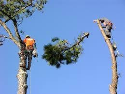 Clear Creek Tree Service: Prescott, AZ