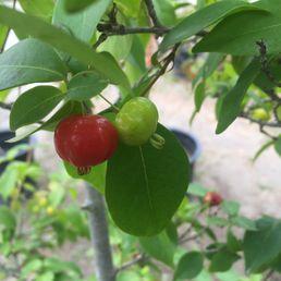 Photos For Mimosa Nursery Yelp