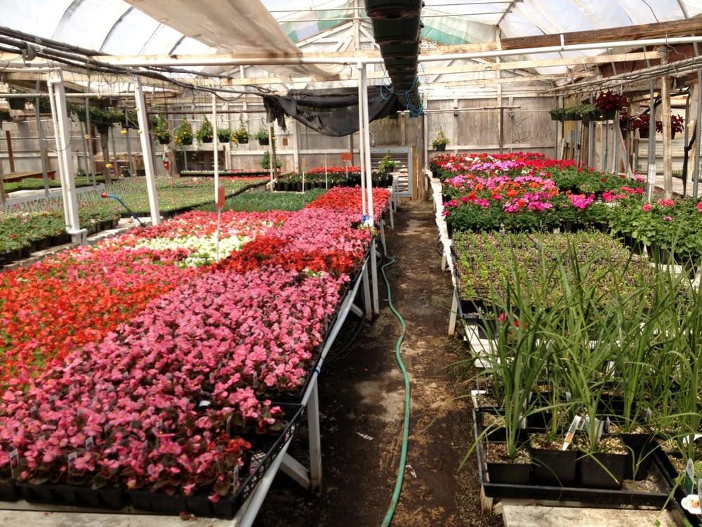 Alameda Greenhouse