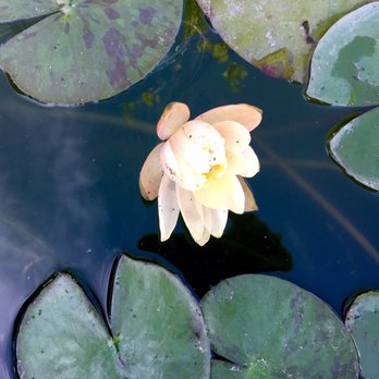 Photo Of Glover Nursery West Jordan Ut United States Waterlily