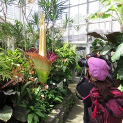Photo Of Foster Botanical Garden   Honolulu, HI, United States. The Corpose  Plant