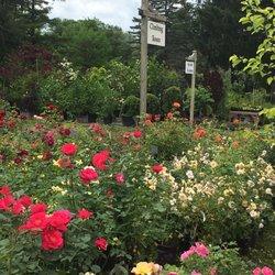O'Donal's Nursery - Nurseries & Gardening - 6 County Rd