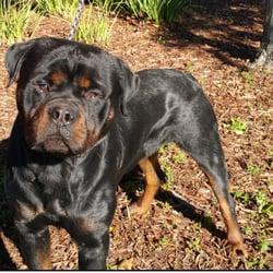 Scottys California Rottweiler Ranch 126 Photos 11 Reviews Pet