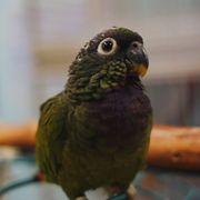 Reptile Island - 131 Photos & 126 Reviews - Pet Stores