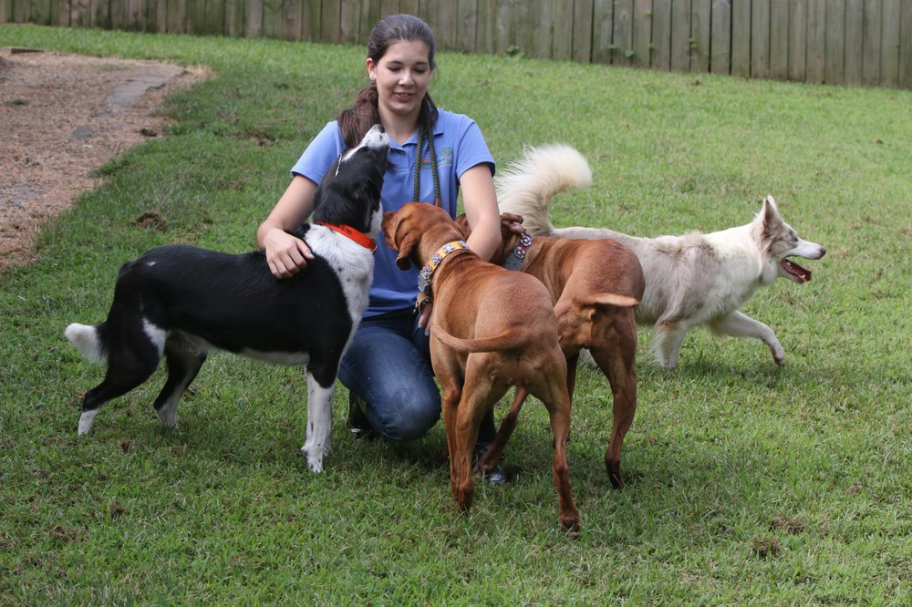 A Stay in the Country Pet Lodge and Training Center: 2610 Shadewood Ln, Charles City, VA