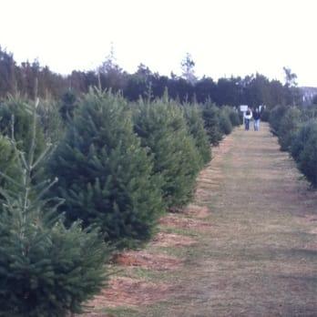 photo of shamrock christmas tree farm mattituck ny united states - Christmas Tree Farm