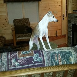 Superb Photo Of Luray Country Cabins   Luray, VA, United States. Katie Surveying  The