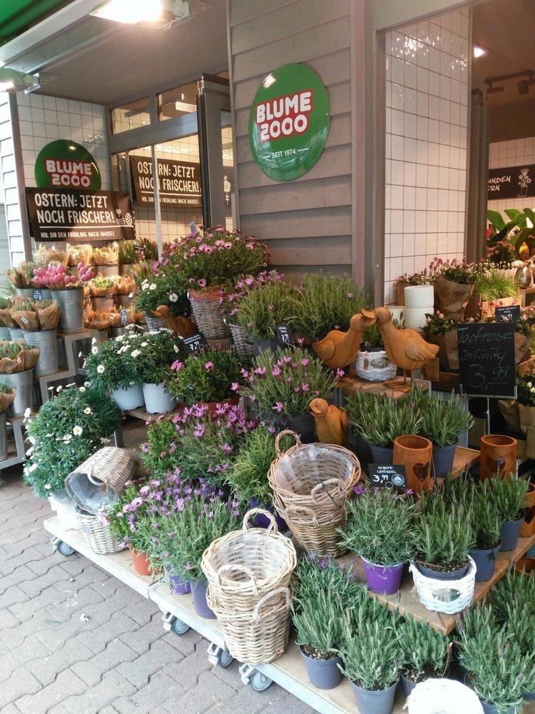 blume 2000 11 billeder blomsterhandlere schweizer str 43 sachsenhausen nord frankfurt. Black Bedroom Furniture Sets. Home Design Ideas
