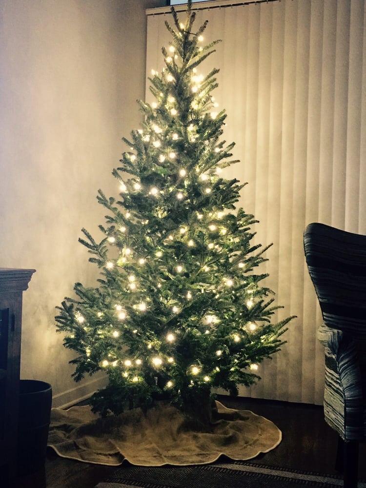 montana fresh christmas trees 11 photos 16 reviews christmas trees 7601 burnet rd crestview austin tx phone number yelp