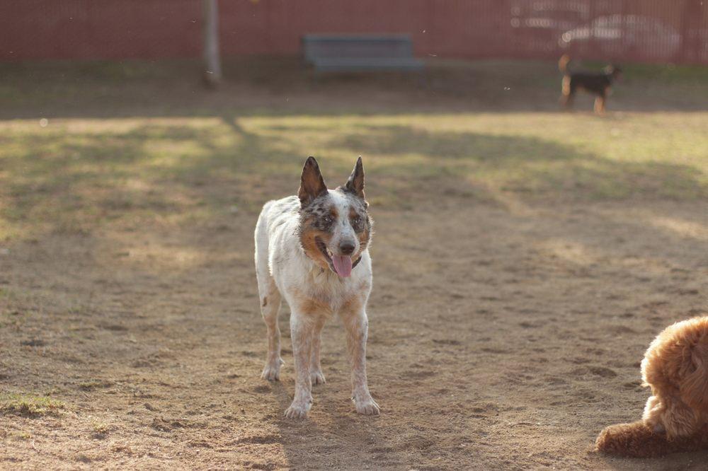Irvine Central Bark Dog Park