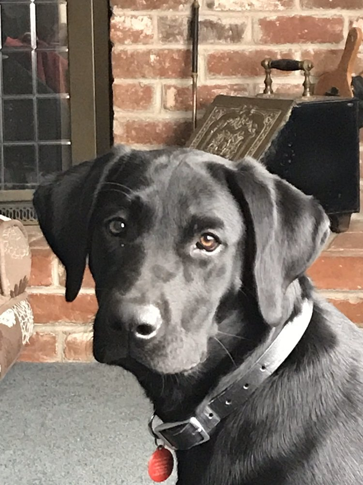 A+ Dog Training: Turlock, CA