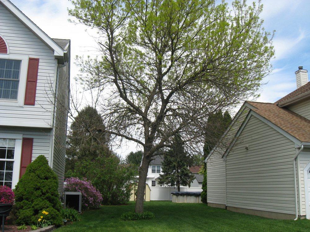 Tree Works: Emmaus, PA