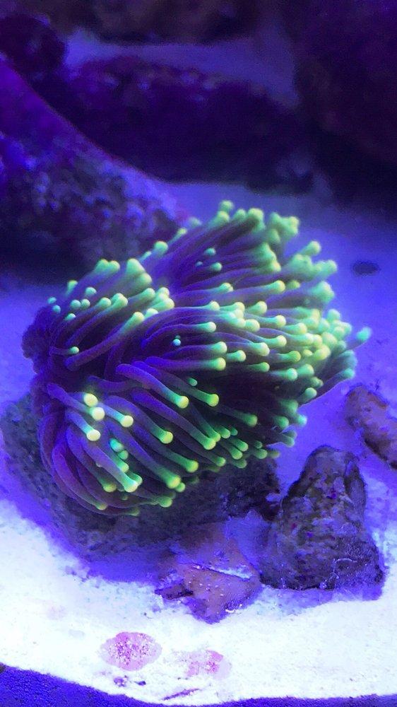 Obscura Reefs: 3538 West Beverly Blvd, Montebello, CA
