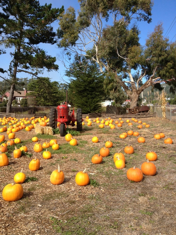 Pumpkin Depot 13 Billeder Lokale Perler 2710 N