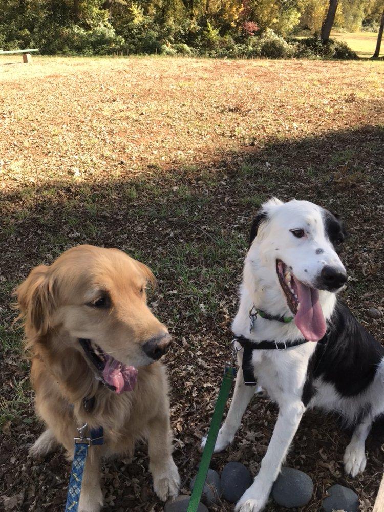 A Dog's Best Buddy: Grass Valley, CA