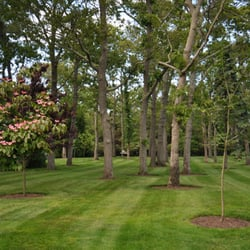 Sterling tree lawn service 47 photos tree services 1691 photo of sterling tree lawn service southampton ny united states tree sciox Image collections