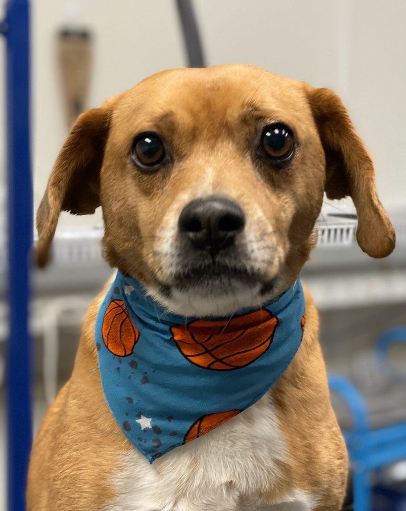 Gary's Professional Dog Grooming: 11551 Deerfield Rd, Cincinnati, OH