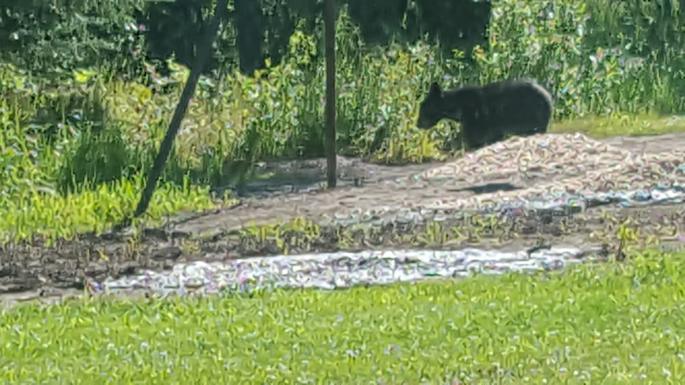 Black bear casino phone number