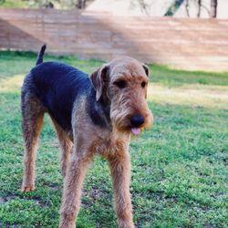 Tlc Dog Grooming Pet Groomers 142 N Mock St Prairie Grove Ar