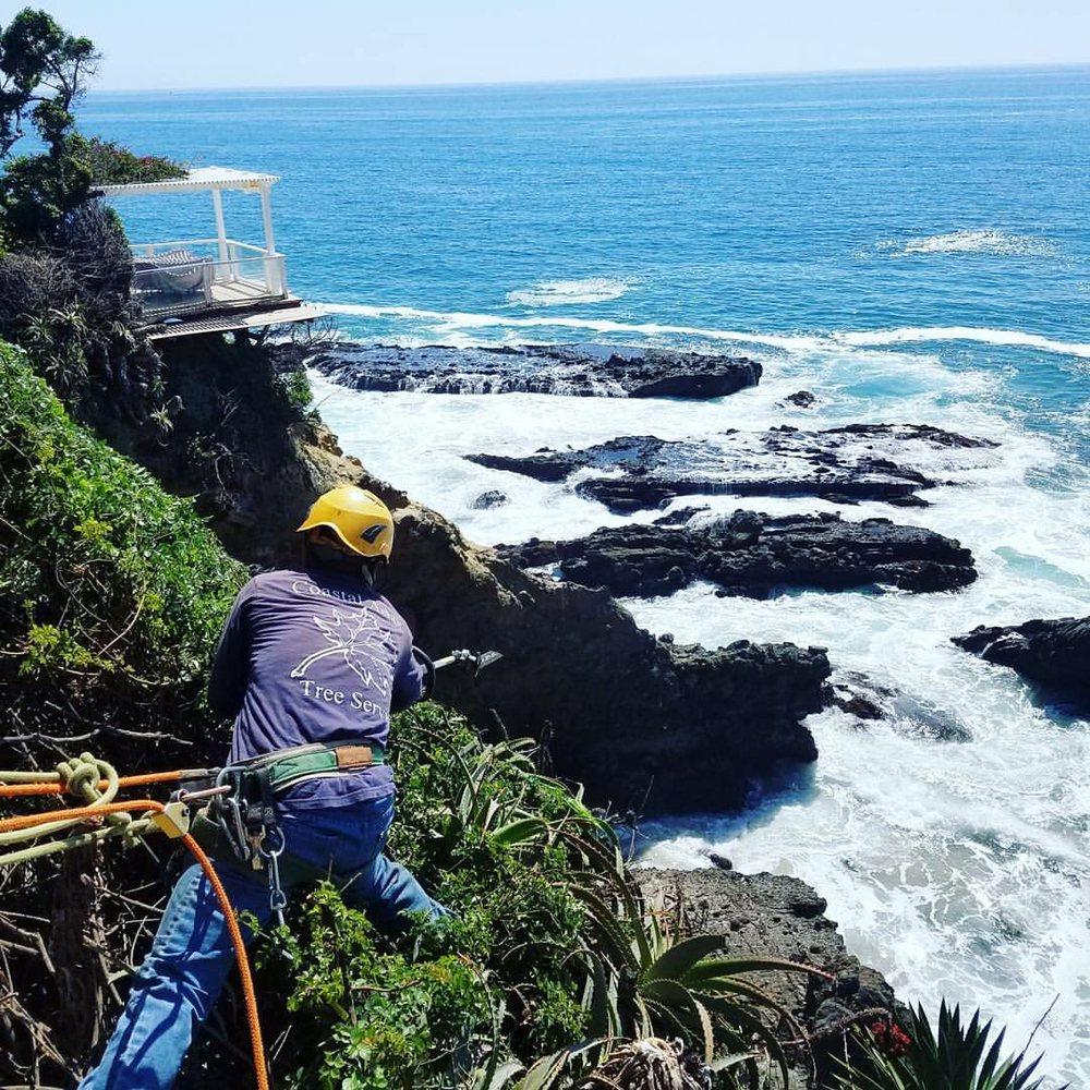 Coastal Arbor Tree Service