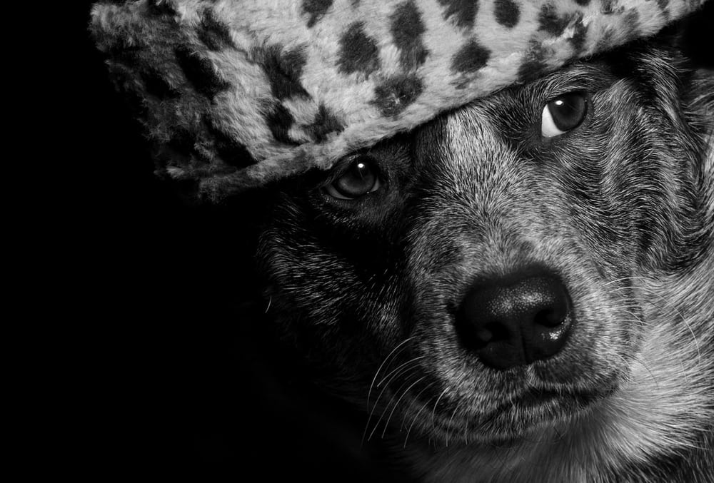 Fotograf Nagold atelier photography by fritsch angebot erhalten 10 fotos fotograf calwer str 19