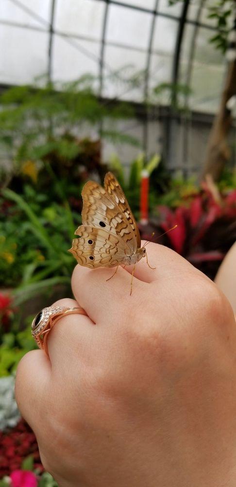 Butterfly Show at Krohn Conservatory: 1501 Eden Park Dr, Cincinnati, OH