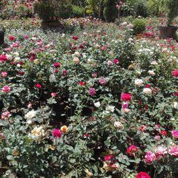 Fotos de vivero santa rosa yelp for Viveros en oaxaca