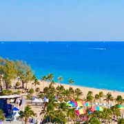 Palm Photo Of Fort Lauderdale Beach Park Fl United States