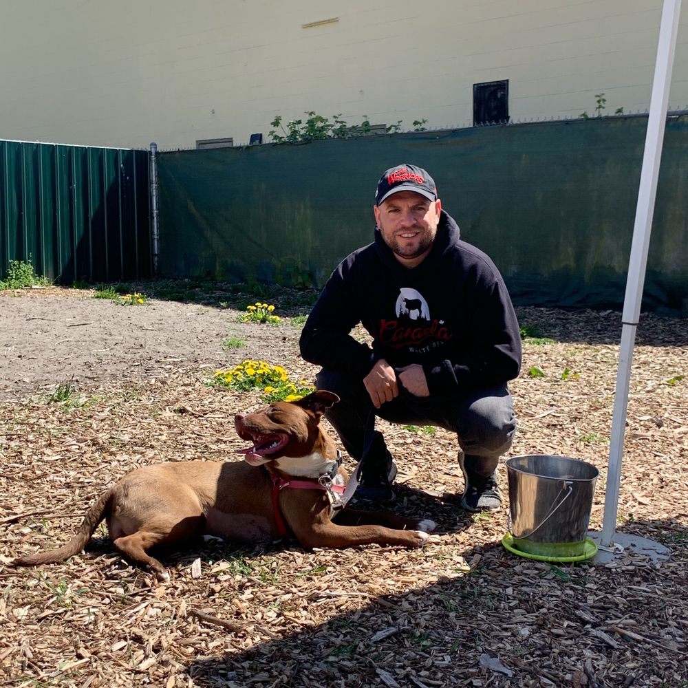 Bark Busters Home Dog Training Queens: Queens, NY