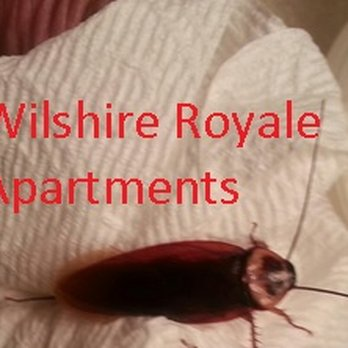 Photo Of Wilshire Royale Apartments Los Angeles Ca United States Roaches