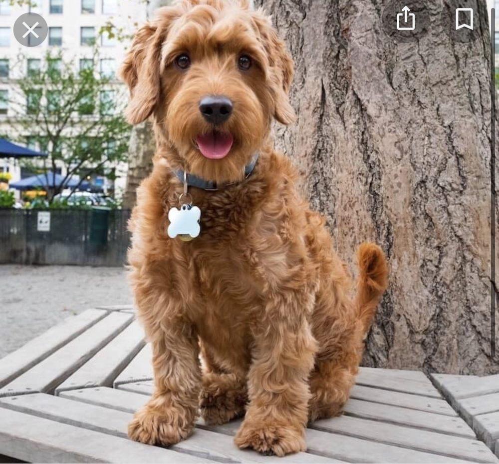 Dapper Dog: 513 Waterman Ave, East Providence, RI
