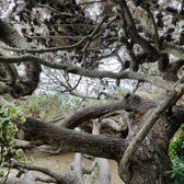 Self Realization Fellowship Hermitage Meditation Gardens 765 Photos 306 Reviews