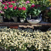 Photo Of El Plantio Nursery Landscaping Escondido Ca United States Spring