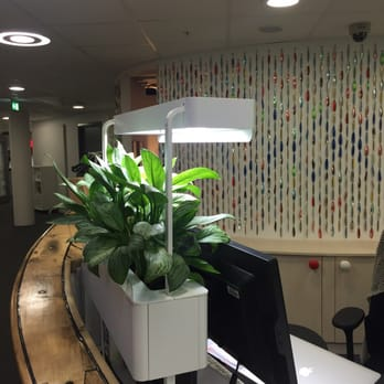 Google norway as advertising henrik ibsens gate 100 for Office plants no natural light