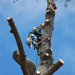 Karta Berkeley California.Matt Horn Landscaping And Tree Care 10 Reviews Tree Services