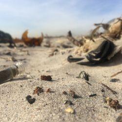 Dead Horse Bay 72 Photos 22 Reviews Beaches Brooklyn