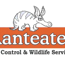 Aanteater Pest Control Hamilton On Phone Number Yelp