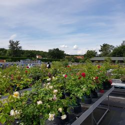 Garten Und Landschaftsbau Potsdam foerster stauden 28 fotos landschaftsbau am raubfang 6