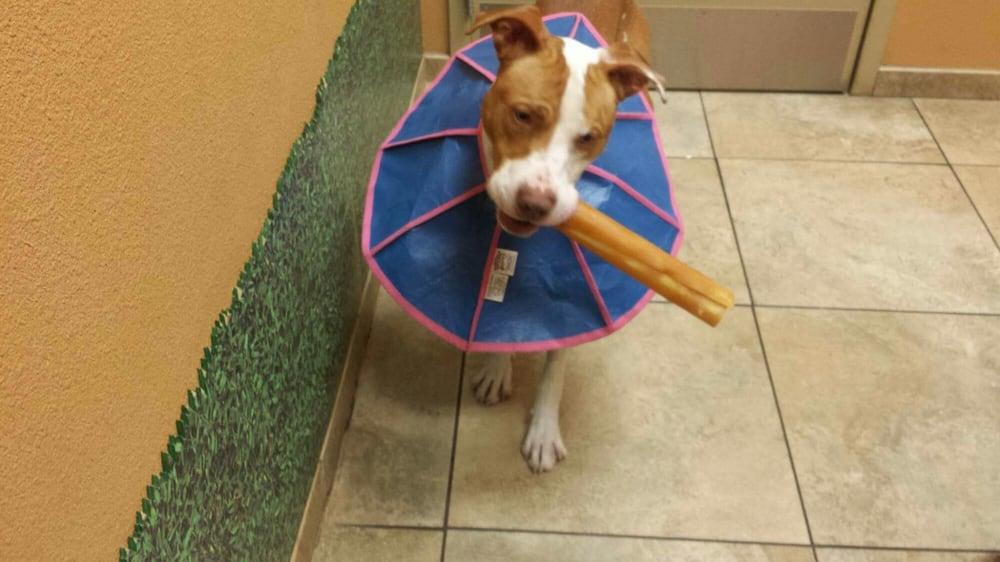 Animal House Naturals Pet Center: 274 37th Ave N, Saint Petersburg, FL