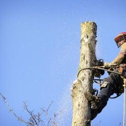 Photo Of Bay Area Maintenance Tree Service Tampa Fl United States