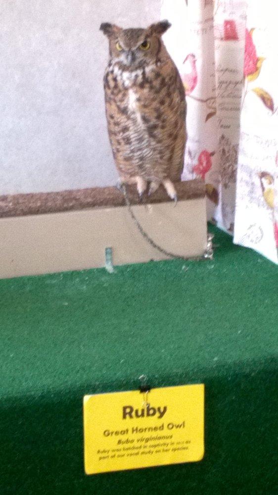 International Owl Center: 126 E Cedar St, Houston, MN